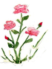 rose sauvage kabylie