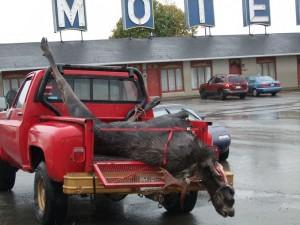 caribou mort