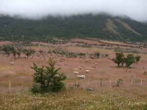 Prairie patagonie