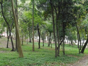 Parc Coimbra