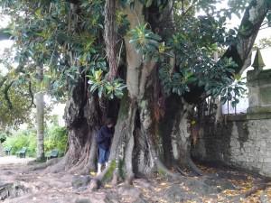 Jardin botanique Coimbra