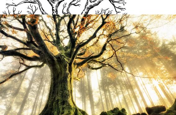 Petit écoute la nature-Une biographie de Valerie jean